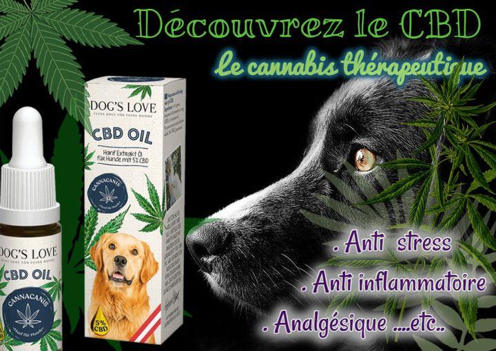 huile de CBd pour chien