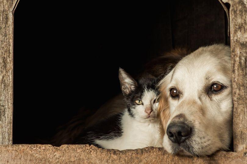 alimentation naturelle pour chien et chat kymaya